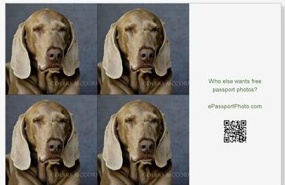take your own passport photos for practically free