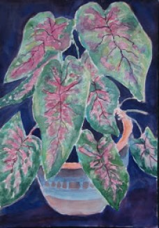 Caladium plant watercolor resized 12 09