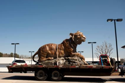 Brenau's new golden tiger rode a flatbed trailer from Eagle Bronze Foundry in Lander, Wyo., where she was cast, to Gainesville. Monte Paddleford, the foundry's owner, drove the statue himself to her granite table top in the park near the intersection of Green and Academy Streets.