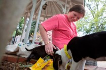 Cassey Wyatt, a senior music student at Brenau, plays with a puppy near the gazebo on Brenau's Gainesville campus. The puppies were provided by the Hall County Animal Shelter as a stress relief during finals week.