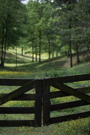 And entryway to a meadow at at the farm of Joyce Lott, WC '59, and her husband Tom Lott. (AJ Reynolds/Brenau University)
