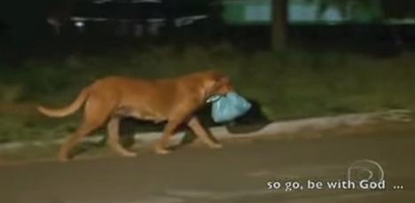 un ejemplo de solidaridad en Lilica que busca comida para otros animales