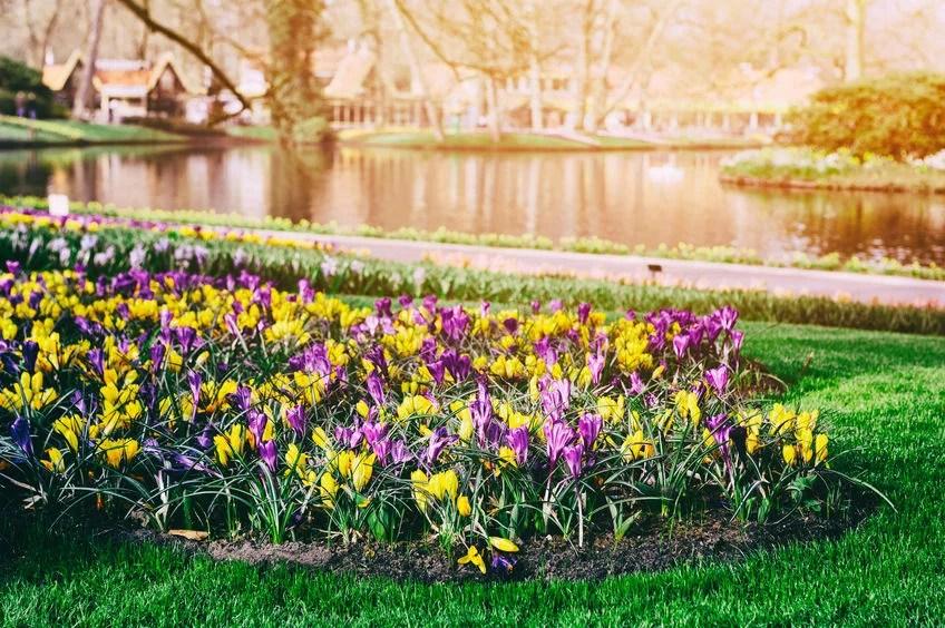 Keukenhof Gardens, the Netherlands paulgrecaud123rf