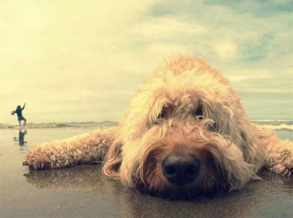bummed-dog-at-beach