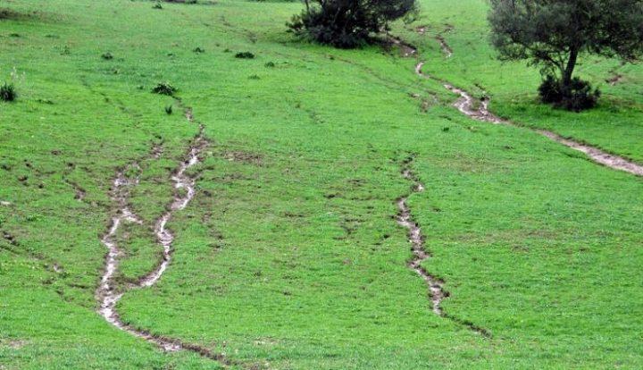 erosi atau tanah lingsoralur yang terjadi pada rerumputan