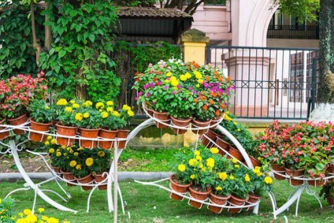 contoh tanaman pot dengan berbagai media tanam