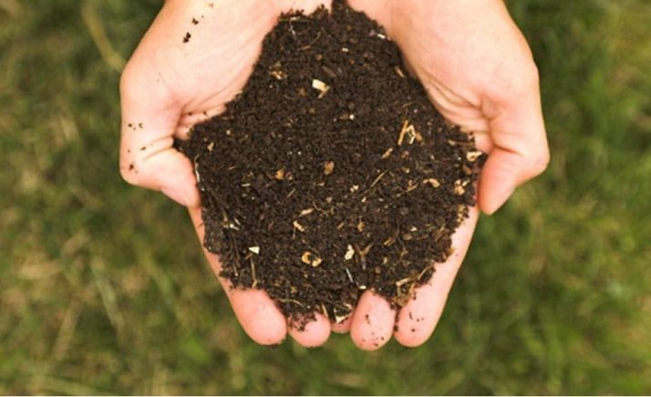 menggunakan pupuk kompos sebagai media tanam dapat menyuburkan tanaman pot