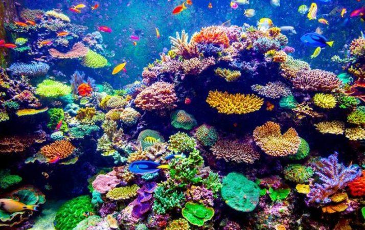 batuan organik terumbu karang