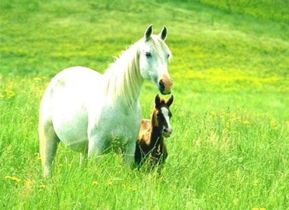 kuda warna-warni