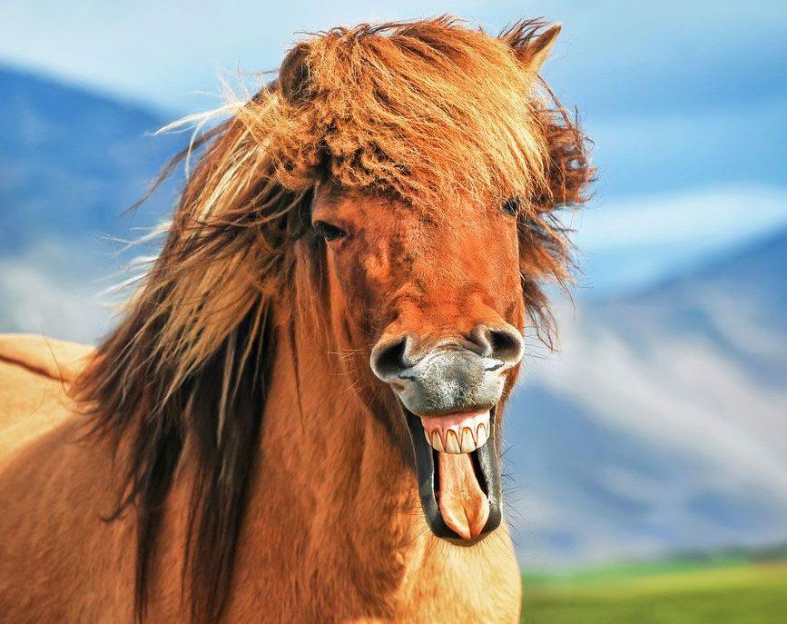 50 Gambar Kuda Poni Lari / Kawin | Kuda Nil & Kartun Kuda | Video Kuda Laut