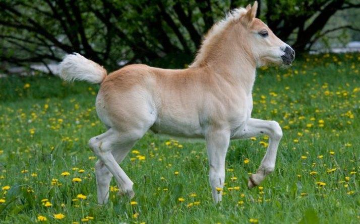 kuda berlarian