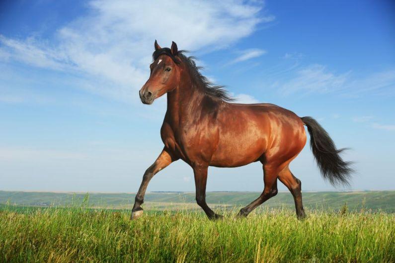 kuda bersantai