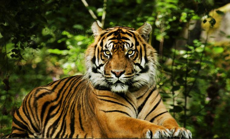 binatang Langka di Indonesia