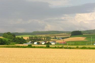 Hokkaido fields