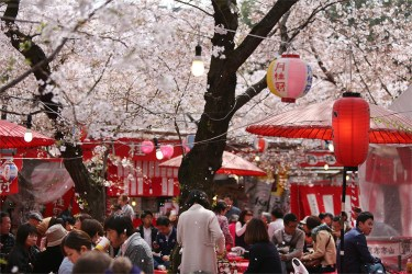Kyoto: Dining under the sakura