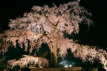 Kyoto: Maruyama park