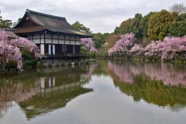 Sakura at Heian-jingu
