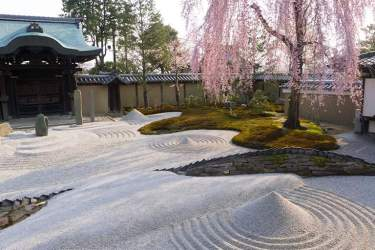 Sakura and rock garden