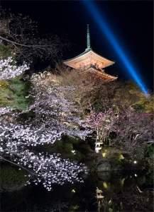 Sakura lightup