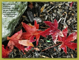 Frosty Leaves and Rockwithquote
