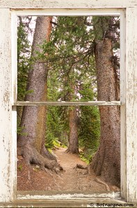Rocky Mountain Forest Pitcure Window Frame View