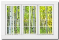 Aspen Tree Forest Autumn Time White Window View