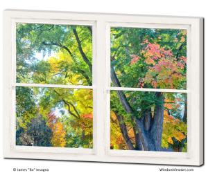window views of autumn trees art