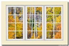 Aspen Tree Magic White Picture Window View 3