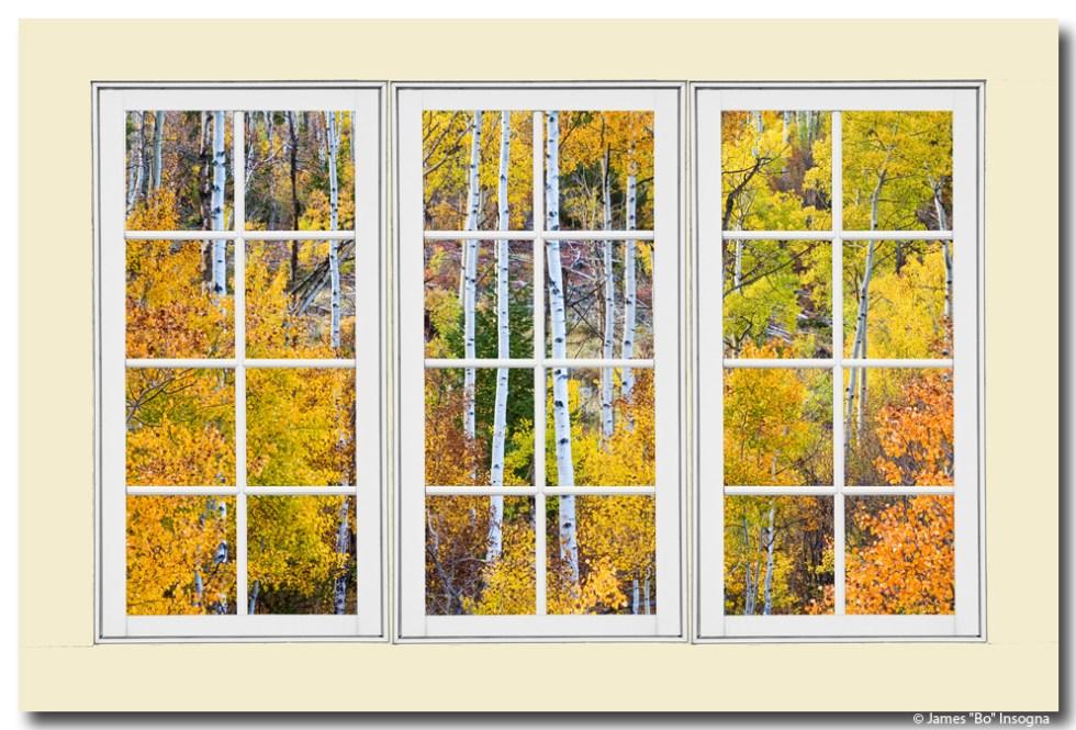 Aspen Tree Magic White Picture Window View 3