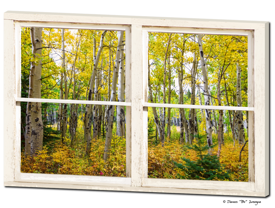 """Golden Forest Rustic White Farmhouse Window View 32""""x48""""x1.25"""""""