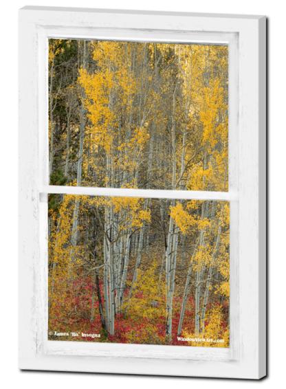 Aspen Forest Red Wilderness Floor Rustic Window View 24″x36″x1.25″ Premium Canvas Gallery Wrap