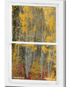 Aspen Forest Red Wilderness Floor Rustic Window View 24″x36″x1.25″ Premium Canvas Gallery Wrap