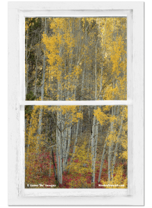 Aspen Forest Red Wilderness Floor Rustic Window View