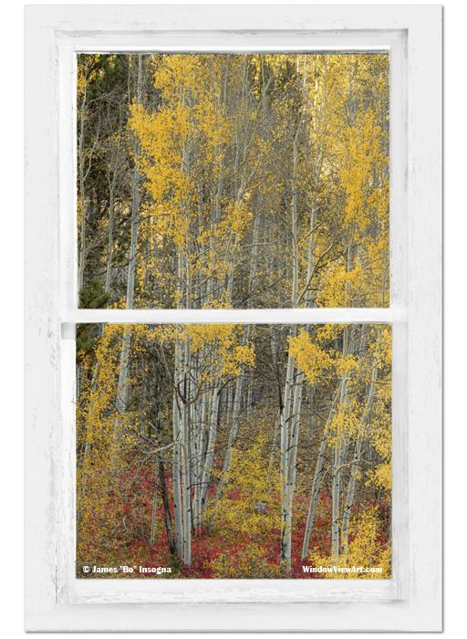 Aspen Forest Red Wilderness Floor Rustic Window View 24X36