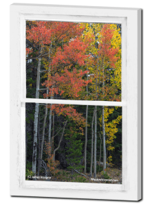 Forest Red Rustic Whitewashed Window View 24x36 Premium Canvas Gallery Wrap