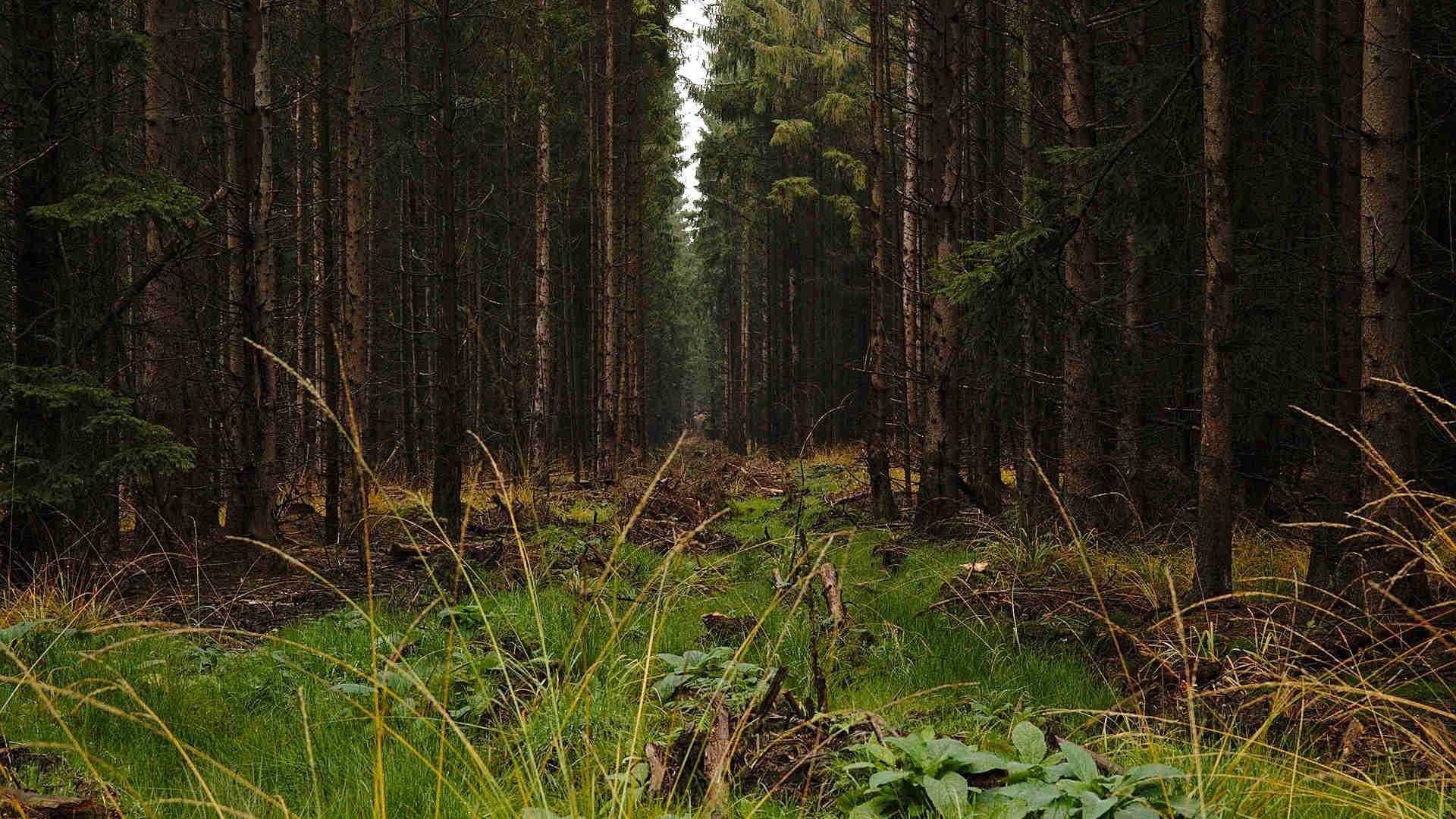 Wenn Bäume Bäume retten