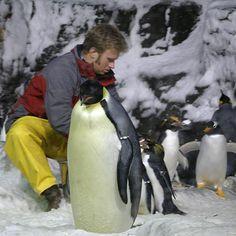 120615 penguin encounter