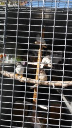 View from outside. Babies have black beaks