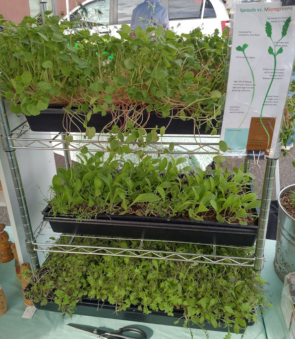 Wire shelving unit microgreens display