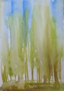 Wet trees