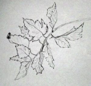 """""""Bug on a Leaf"""" 26 September 2011"""