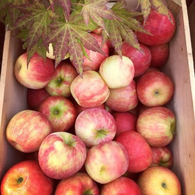 Fresh-Picked or Pick-Your-Own Apples