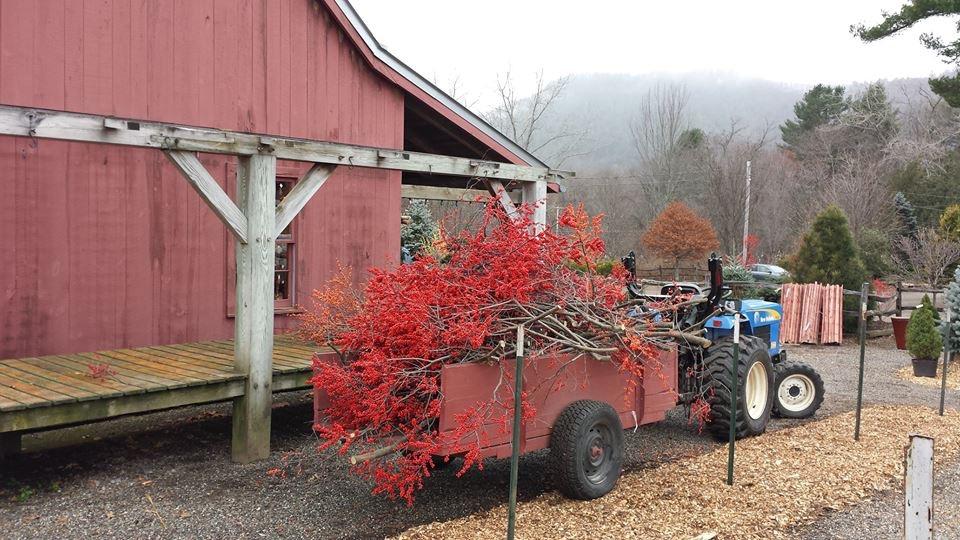 Winterberry on Truck