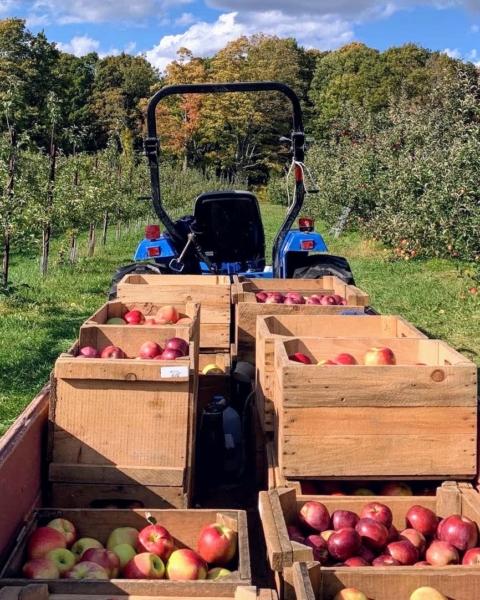 Apple picking track