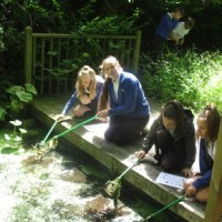 Year 6 - pond dipping!