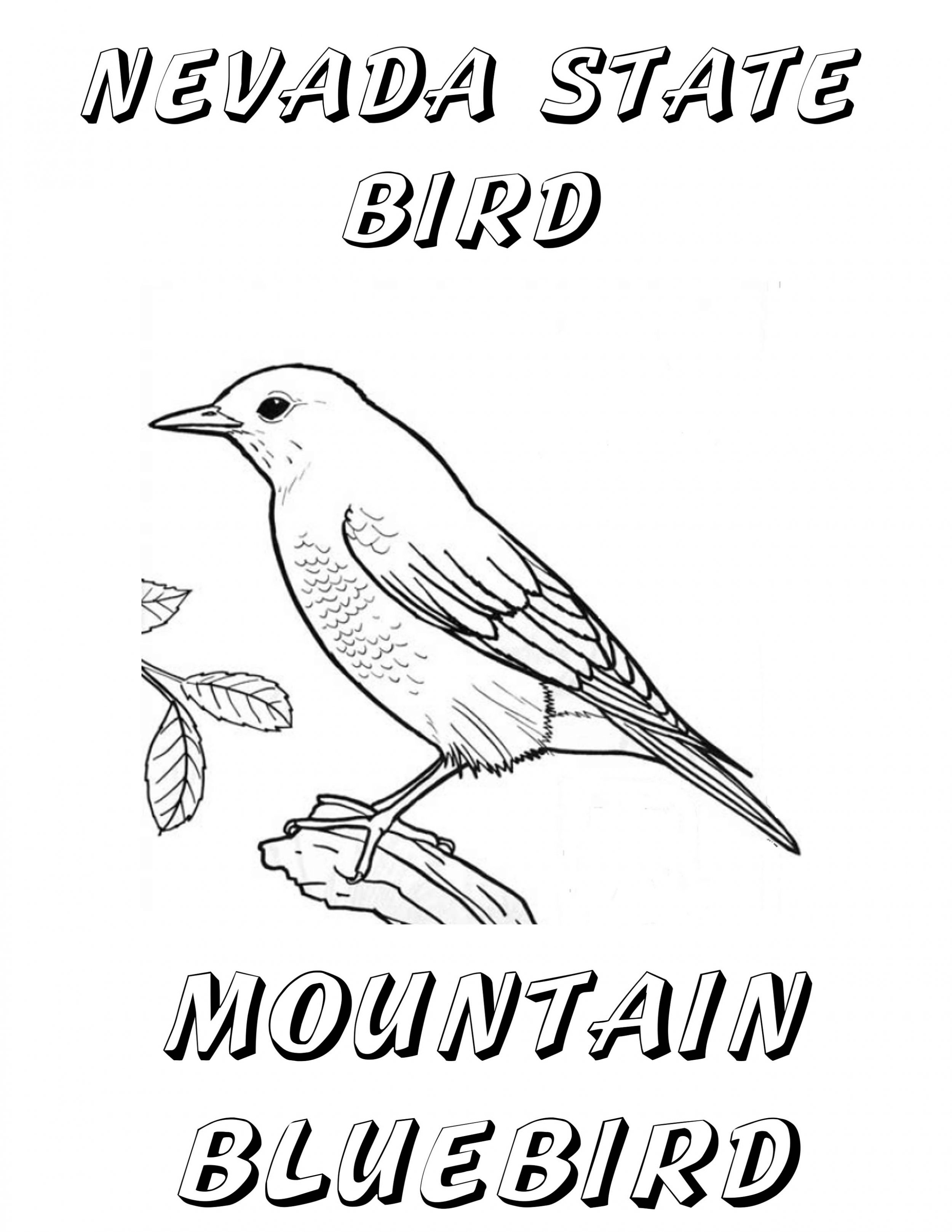 coloring pages of a blue bird cooloring com