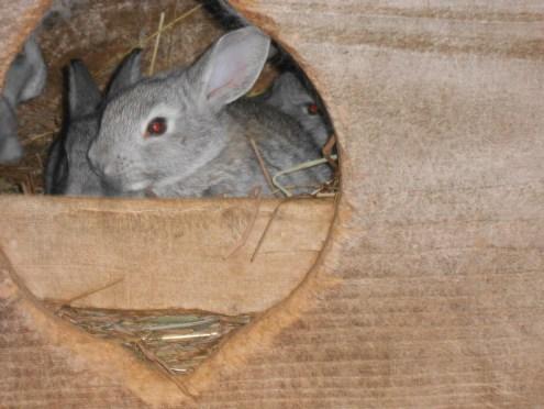 Adorable bunny wabbits