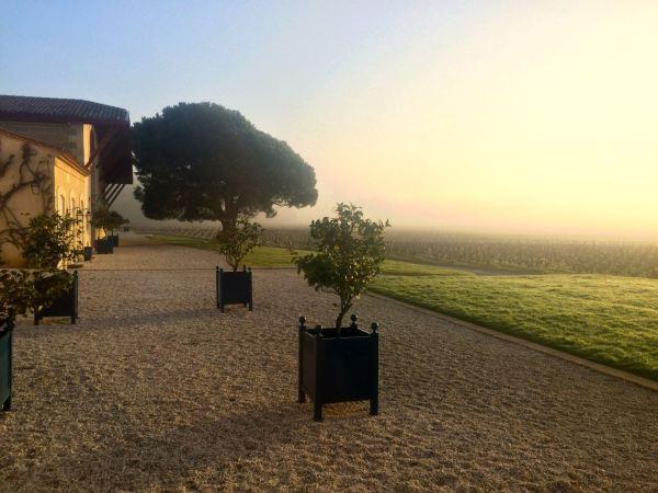 Morning mist Domaine de Chevalier
