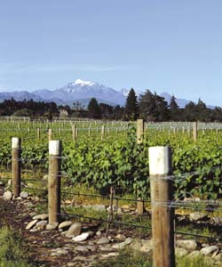 A vineyard at The Crossings
