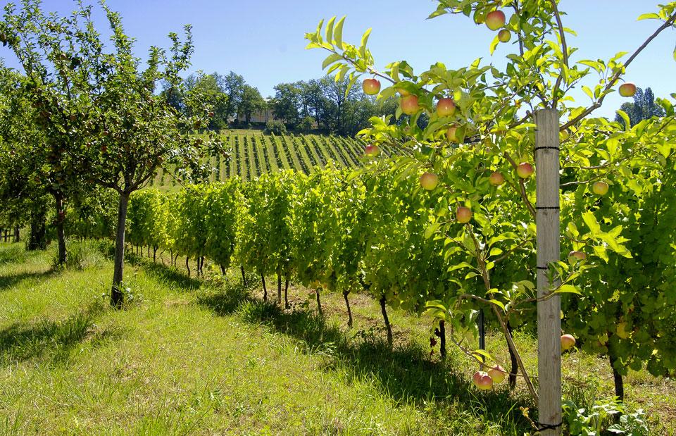 bergerac wines france